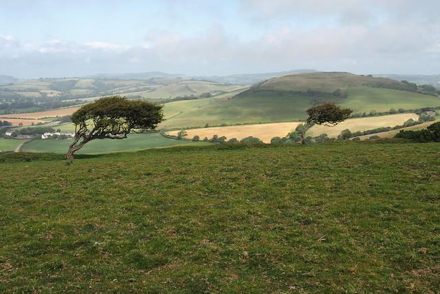 Wind blown hill