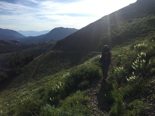 PCT: Day 84