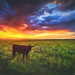 Flint Hills - Party of One by Jonathan Tasler