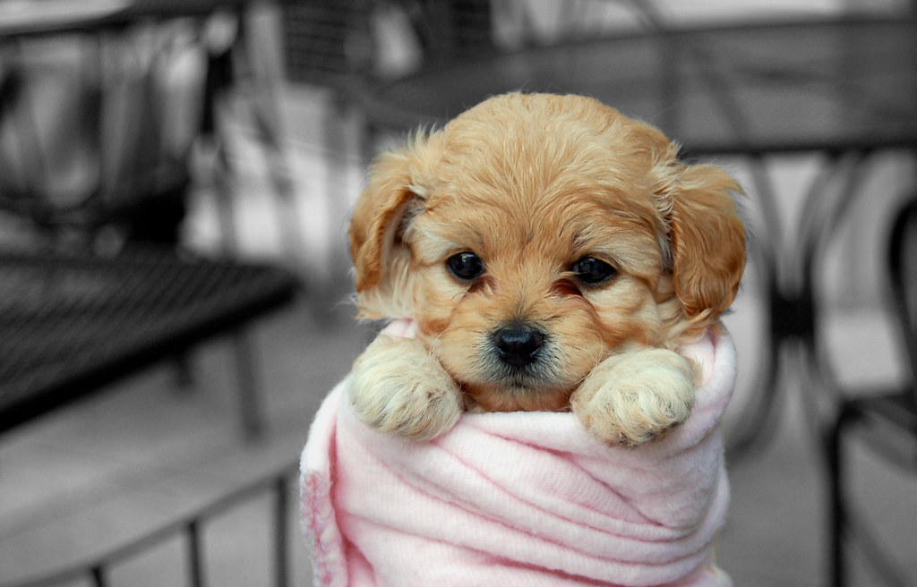 Image result for adorable puppy