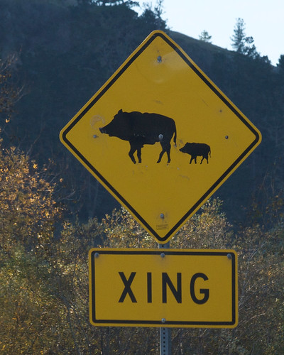 Feral Pig Crossing | by Tom Clifton