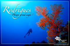 Gorgones de l'île Rodrigues