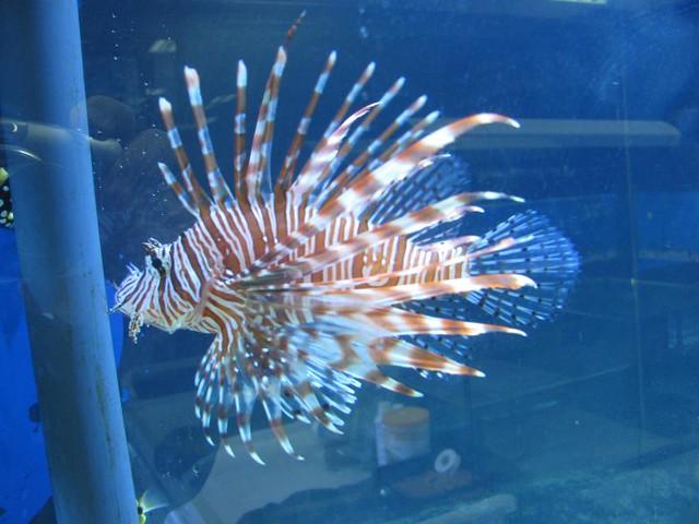 tropical fish for sale   Steven Damron   Flickr