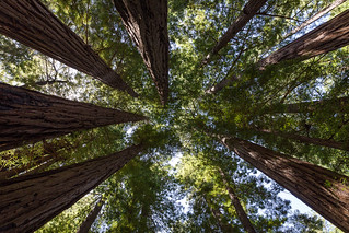 Muir Woods | by dtpancio