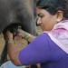 May/2007 - Wife of urban dairy farmer Anan Thainan, Lakshmi Thainan, milks one of their buffaloes (photo credit: ILRI/Stevie Mann).