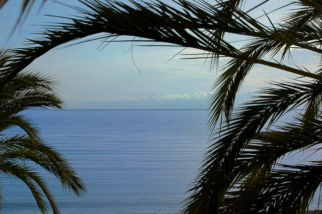 Méditerranée et palmiers - Menton (Alpes-Maritimes)