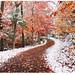 Two Seasons by Ben Heine