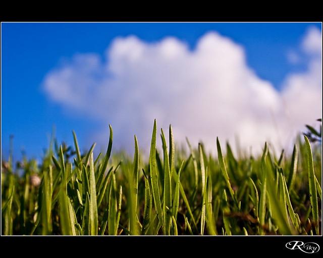 Hierba - Green Grass