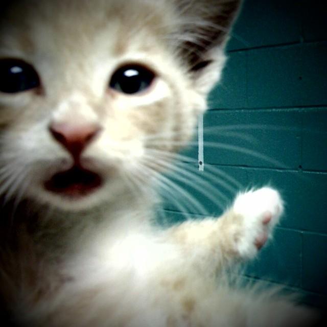 breakroom kitten