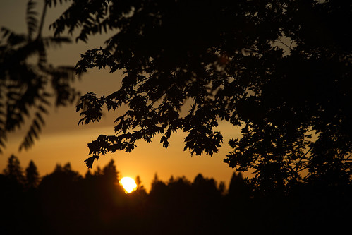 sunset oregon canon river ian eos golden leaf mark silhouettes ii 5d salem tones willamette sane