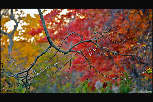 imran anwar long island new york 2009 eastpatchogue fall framed green inspiration landscape landscapes longisland nature newyork nikon outdoors patchogue peaceful red seasons sky stilllife tranquil tranquility yellow
