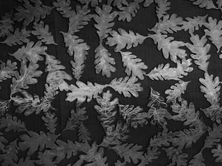 leaves | by gnuru