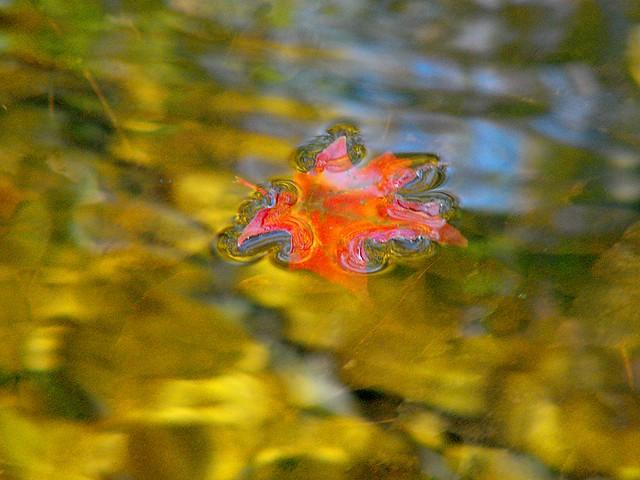 Drowning Autumn