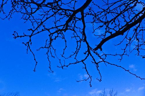 Blue Sky | by KeriFlur