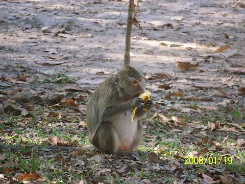 Monkey with a banana | by wallygrom