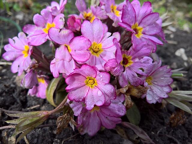 950xl  #macro #flower #photography #waterdrop #shot