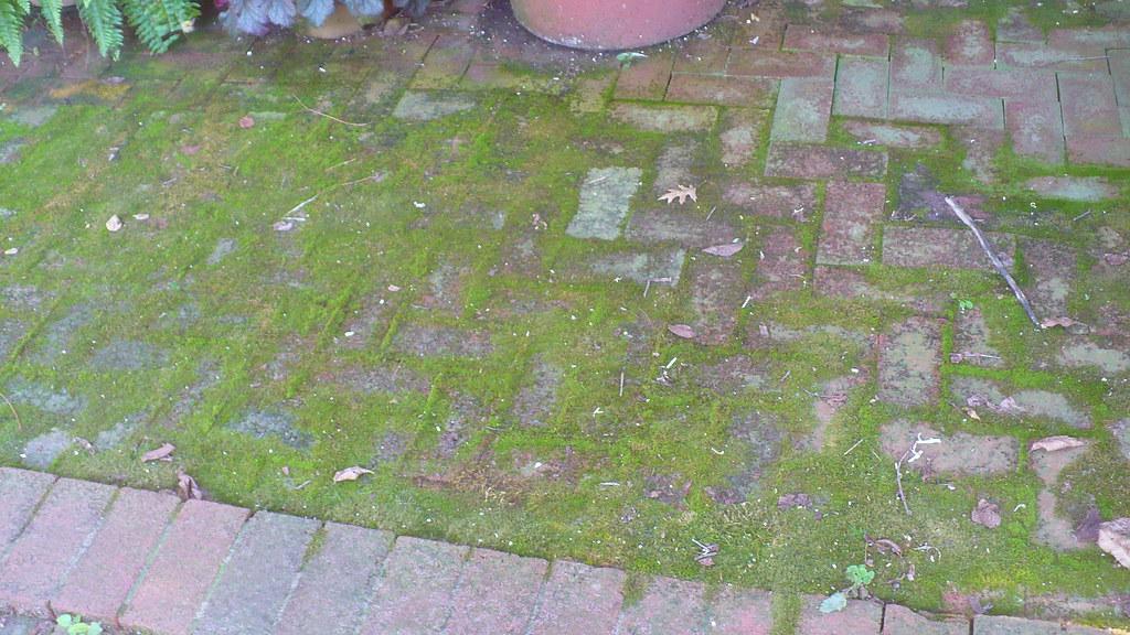 mousse sur les dalles de jardin