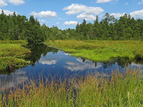 summer sky water nj pinebarrens burlingtoncounty lebanonstateforest byrnestateforest njas whitesbog newjerseyaudubon exceptionalexcursion