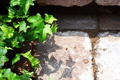 Terrace Garden Cobblestone Steps | by A Storybook Life