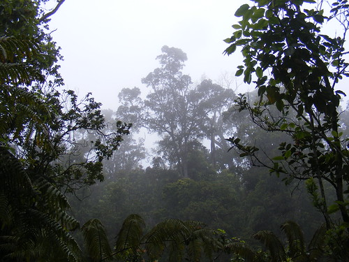 Tue, 04/28/2009 - 15:12 - Laupahoehoe rainforest. Credit: Susan Cordell.