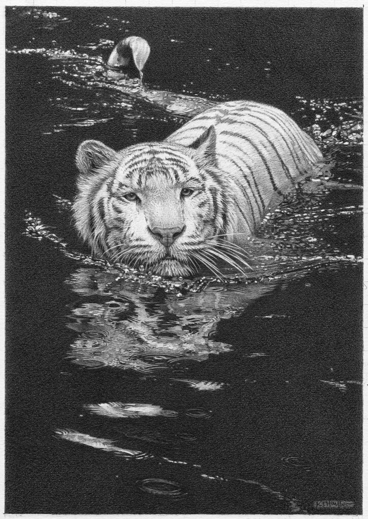Tiger Pencil Art Drawing