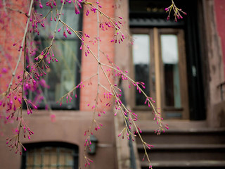 Close-up of Springtime in Brooklyn | by samuelclay