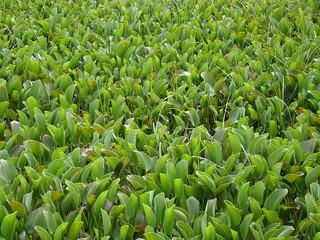 water plants | by mauro halpern
