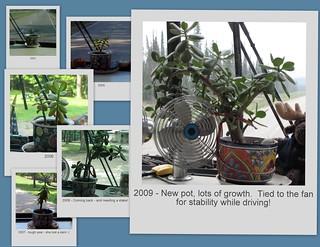 Dashboard Plant