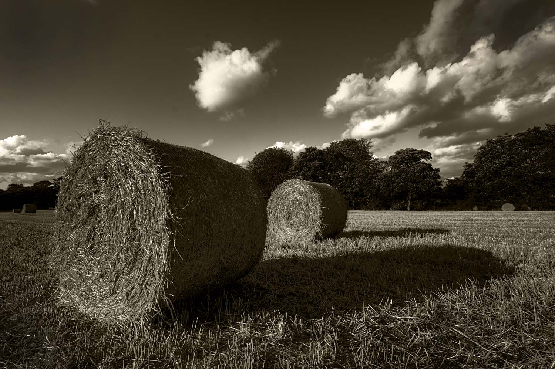 grass,field,hay,bale,bales,autumn,monochrome,black,white,grappenhall,warrington,uk,cheshire,Grappenhall Village,England,village,A50,A56,365days,viullages,english,farm,farming,farms,sepia,B/W,mono,HDR,high dynamic range,Hotpicks,hotpics,hot,pics,pix,picks,hotpix.freeserve.co.uk,hotpix!
