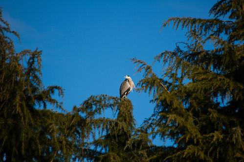 Heron lookout