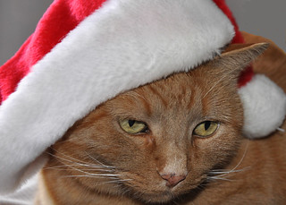 Remo with his Santa hat!!!