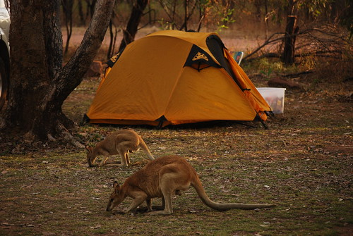 Camping at Katherine Gorge | by Travel Collective