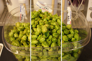 Willamette, Cascade & Magnum Hops | by ae