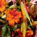 Flower fr474
