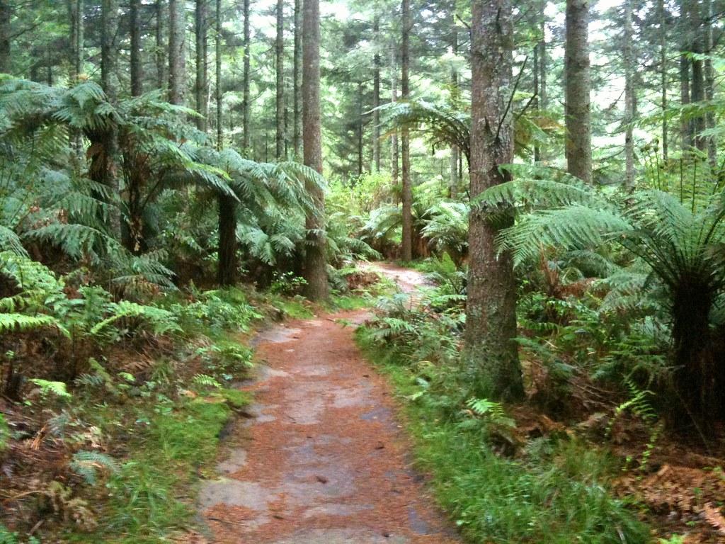 rotorua mountain bike trails