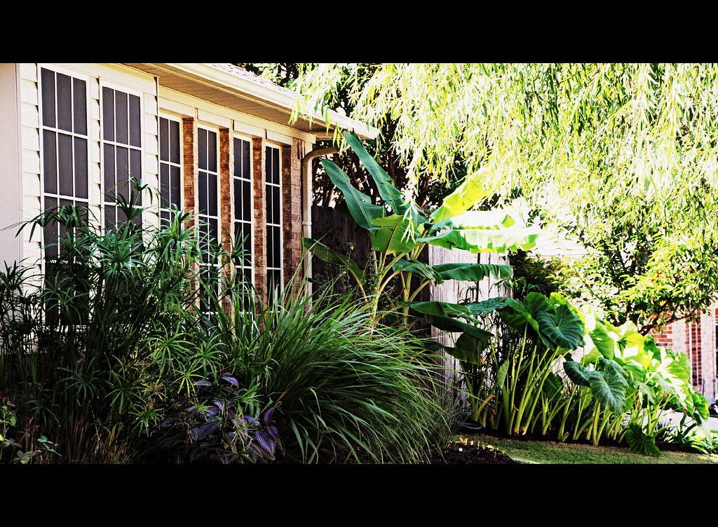 The Side Yard Tropical Landscape Keller Texas Green Home W Flickr
