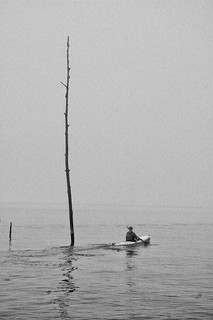 Paddler and Naked Tree