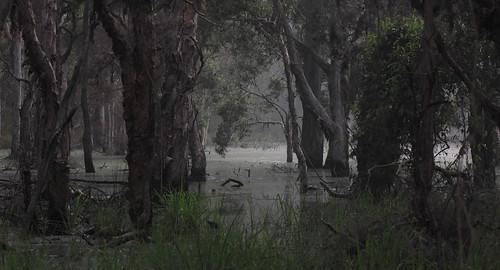 fog australia seqld floodedarea