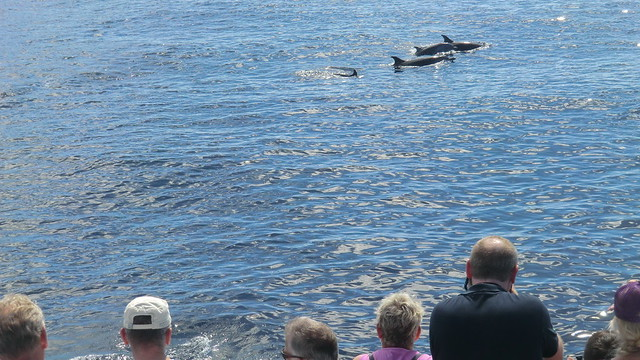 Dominica (Caribbean) -Dolphin's all around - fascinating!!
