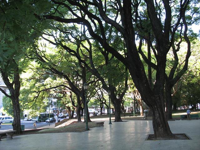 Los grandes árboles