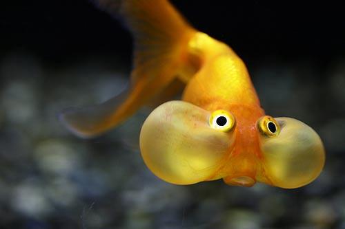 strange fish | by ihosam