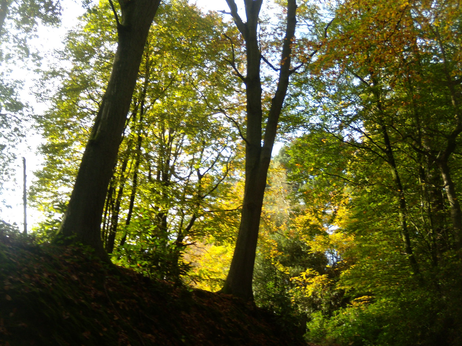 Autumn trees 2 Witley to Haslemere