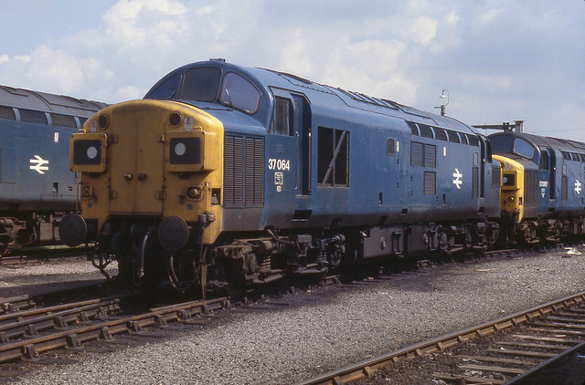 37064 March 6-5-79