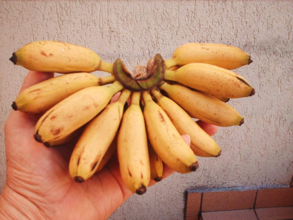 Resultado de imagem para banana ouro