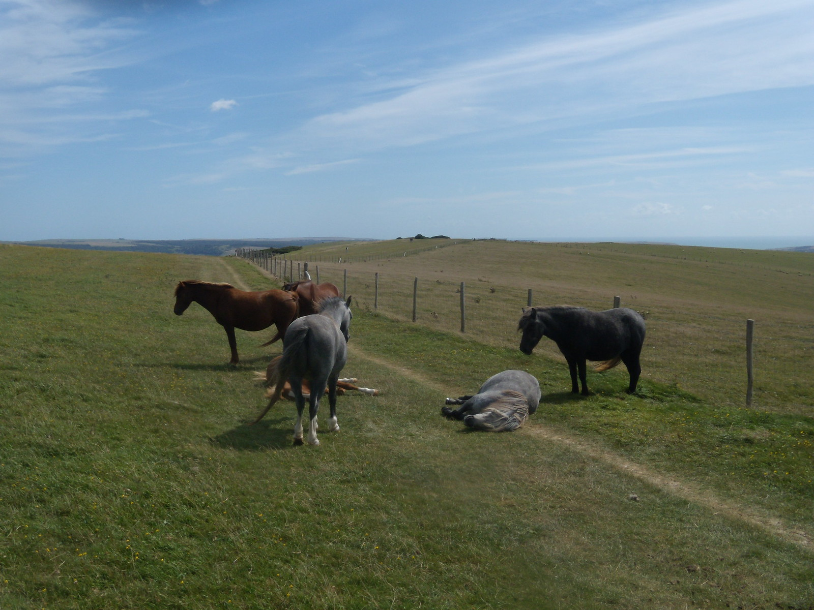 Horses lying down Glynde to Seaford