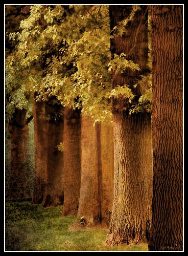 autumn fall texture leaves yellow photoshop canon large telephoto huge layers treeline legacy majesty tistheseason treetrunks karmapotd texturedlayers platinumheartaward canoneosdigitalxsi miasbest daarklands legacyexcellence flickrvault trolledproud trollieexcellence