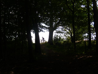 Through a wood Lenham to Charing