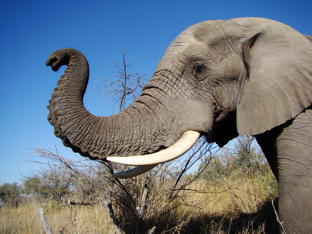 صورة تظهر فيلة