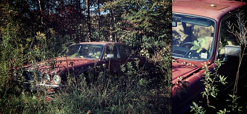 trees red plants car diptych d70 abandonded 1870mm