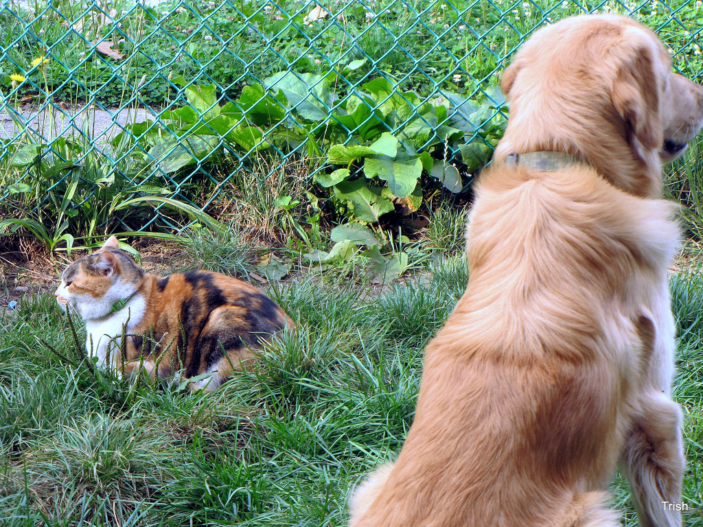 DOG !---What Dog ? //////// CAT !---What Cat ?
